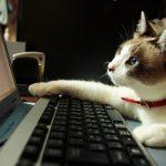 セフレ収集用のアカウントのツイッター登録とプロフィール作り