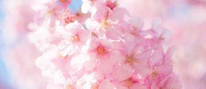春はオフパコ